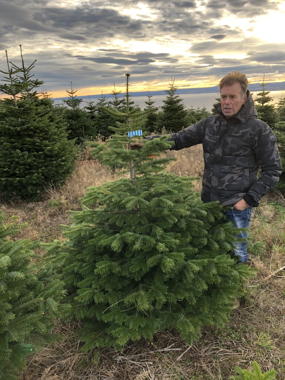 Nordmann Kerstboom 150 180 Cm Xmas3 Nl